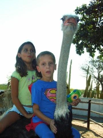 Picture of ostrich farm