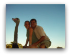 Wildlife in Africa and ostrich