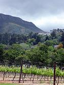 vineyards of cape town south africa wines