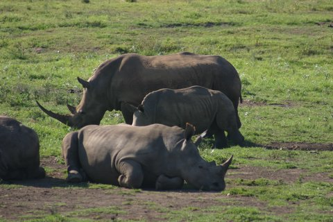 Picture of rhinoceros