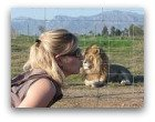 Wildlife in Africa and lions