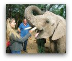 Wildlife in Africa and baby elephant
