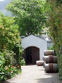 cellar of cape town south africa wine